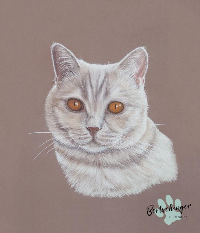 Katzenporträt mit Pastellkreide