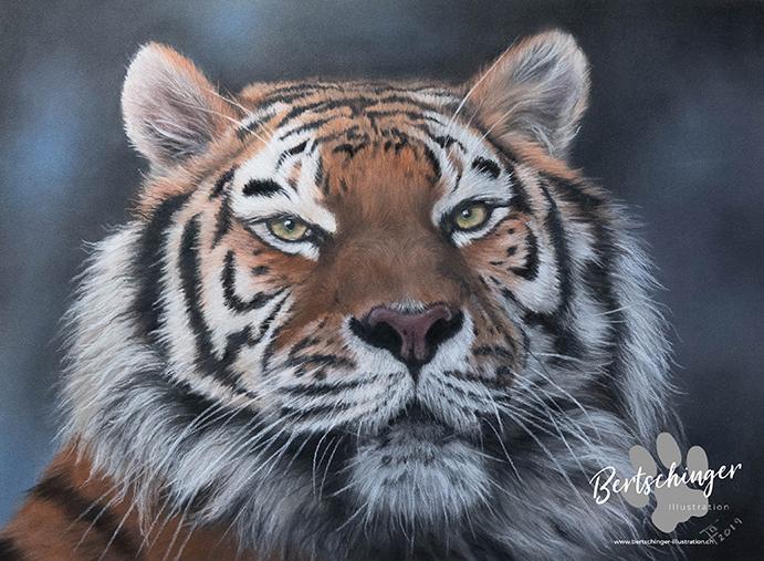 Tigerporträt mit Pastellkreiden