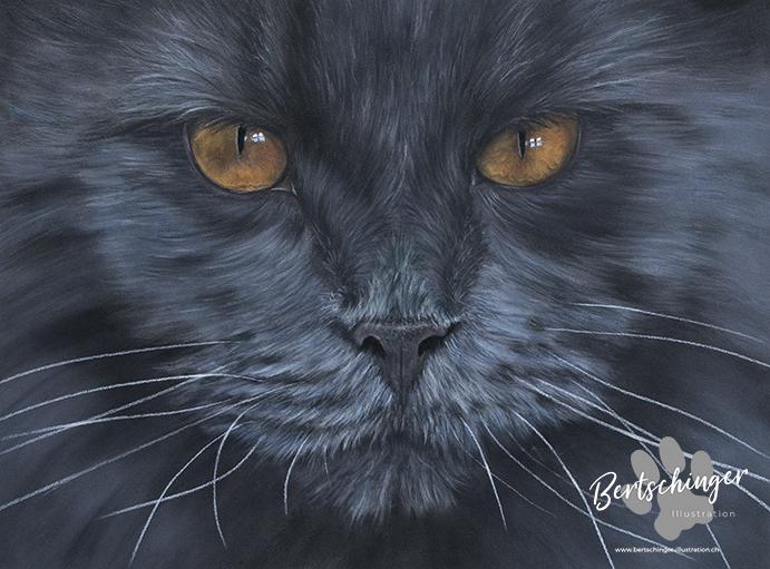Zeichnung einer schwarzen Katze mit Pastellkreide